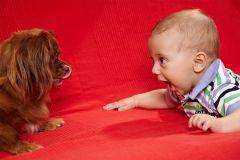 fotografie cu copil si caine
